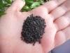 Llavors de sèsam negre, una font important d'omega6